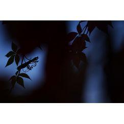Papillons et libellules 3