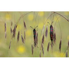Papillons et libellules 4