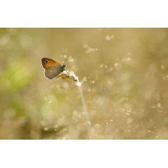 Papillons et libellules 1