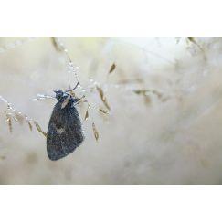 Papillons et libellules 9