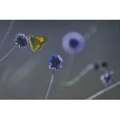 Papillons et libellules 11