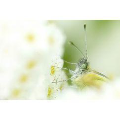Papillons et libellules 17
