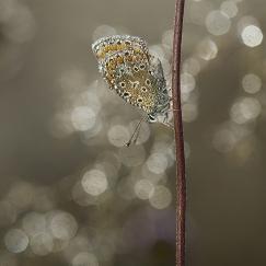 Papillons et libellules 13