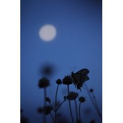 Demande à la lune
