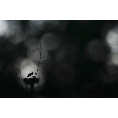 Entre l'ombre et la lumière