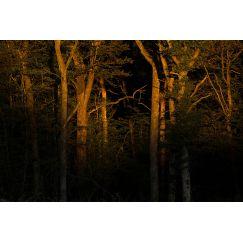Forêt au lever du soleil