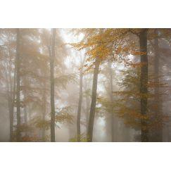 Brumes sur la forêt