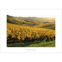 Vignoble du Vernois - Jura