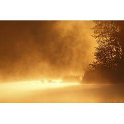 Fuligules milouins sur l'étang
