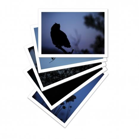 Collection De l'aube au crépuscule (2)