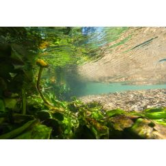 Rivière Ornain 1