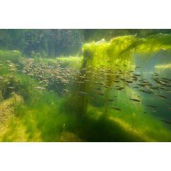Rivière Ornain 4