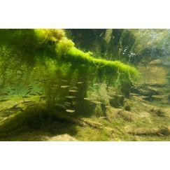 Rivière Ornain 7