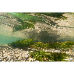 Rivière Ornain 9