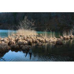 Lac jurassien 4