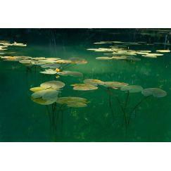Lac jurassien 6