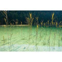 Lac jurassien 15